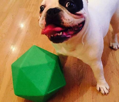 Dex Dog 1