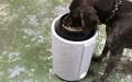 Corilla-NedandFred-Product-imagesFEEDER Dog 2