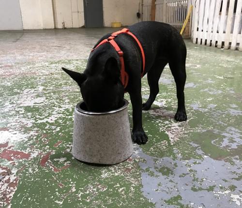 Corilla-NedandFred-Product-imagesFEEDER Dog 3