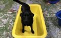 Corilla-NedandFred-Product-imagesLARGE BATH 2