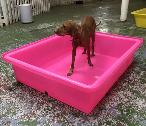 Large dog paddling pool uk